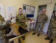 Vets taught the dog handlers how to care for their canine partners