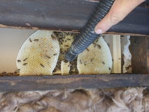 The Bees and the honeycomb had to be removed