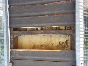 The Bees were hidden behind the wooden panels